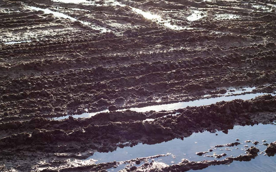 Soil Drying Agents